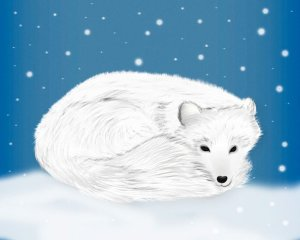 Illustration Polarfuchs